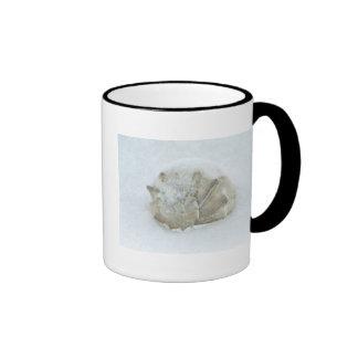 Snow Shell Coffee Mugs