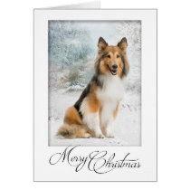 Snow Sheltie Christmas Card