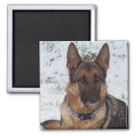 Snow Shepherd 2 Inch Square Magnet