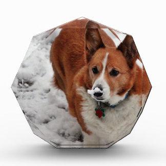 Snow Snout Acrylic Award