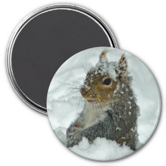 Snow Squirrel Magnet