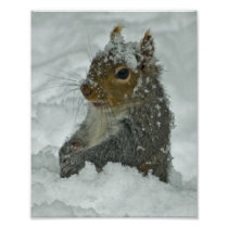 Snow Squirrel Poster