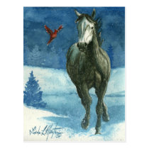 Snow Tag Wild Horse Post Card