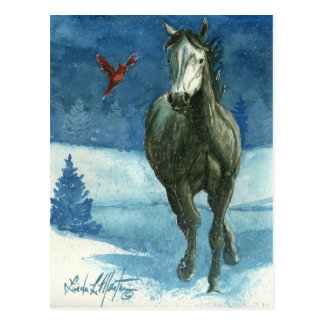 Snow Tag Wild Horse Post Card