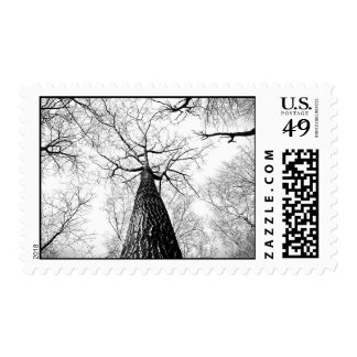 Snow Themed, Frozen Winter Twigs Looks Like Sparkl Postage Stamp