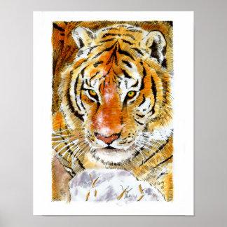 Snow Tiger Poster
