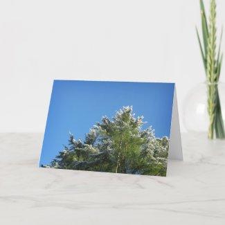 Snow-tipped Pine Tree on Blue Sky card
