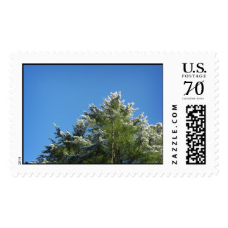 Snow-tipped Pine Tree on Blue Sky – Large Stamp