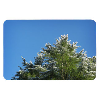 Snow-tipped Pine Tree on Blue Sky Magnet
