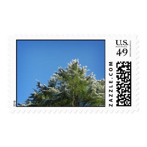 Snow-tipped Pine Tree on Blue Sky – Medium Postage Stamp