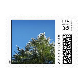 Snow-tipped Pine Tree on Blue Sky – Small Postage