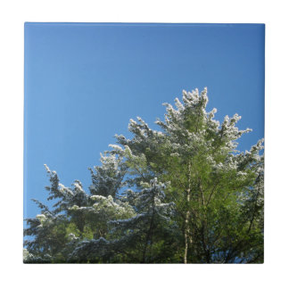Snow-tipped Pine Tree on Blue Sky Small Square Tile