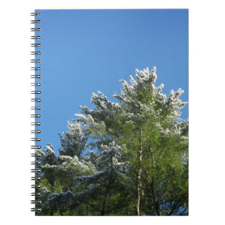 Snow-tipped Pine Tree on Blue Sky Spiral Notebook