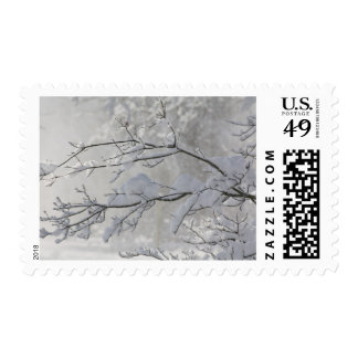 Snow Touched Branches on a Misty Winter Morning Postage
