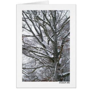 Snow Tree Card