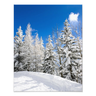 Snow trees under a clear blue sky photo print