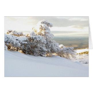 Snow Wave, Oregon Card