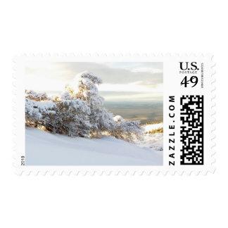 Snow Wave Postage