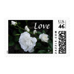 Snow White Rose - Love Postage