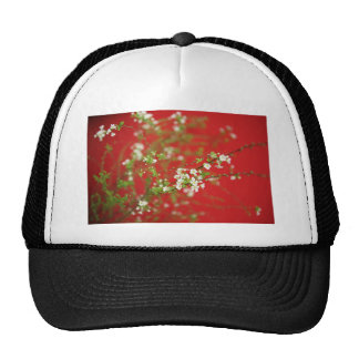 Snow willow mesh hats