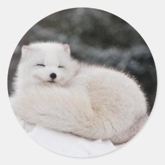 snow winter weather frozen snow ice Arctic Fox Classic Round Sticker