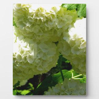 Snowball Bush Blooms Photo Plaque