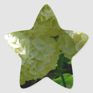 Snowball Bush Blooms Star Sticker