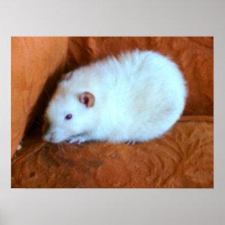 Snowball Rat Poster