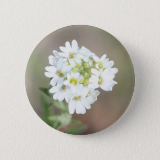Snowball Saxifrage Pinback Button