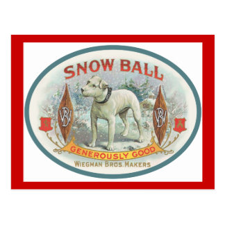 Snowball the Dog Post Cards