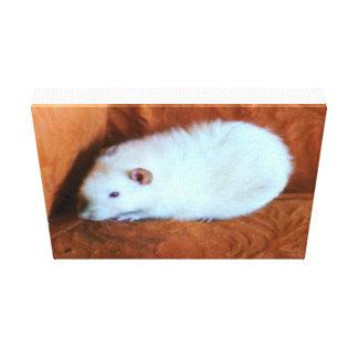 Snowball White Rat Canvas Print