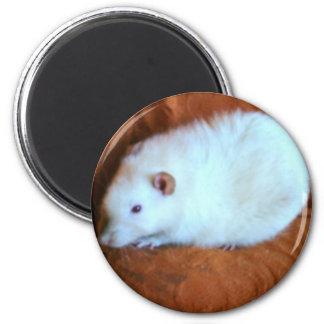 Snowball White Rat Magnet