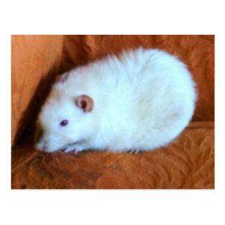 Snowball White Rat Postcard
