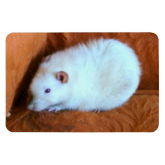 Snowball White Rat Premium Magnet