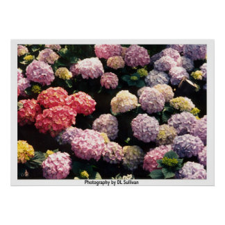 Snowballs in Pink and Purple  by TDGallery Print