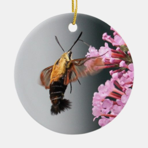 Snowberry Clearwing Ornamentos De Reyes Magos