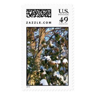 snowcoated postage