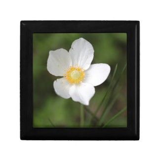 Snowdrop Anemone (Anemone sylvestris) Jewelry Box