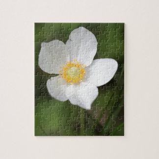 Snowdrop Anemone (Anemone sylvestris) Jigsaw Puzzle