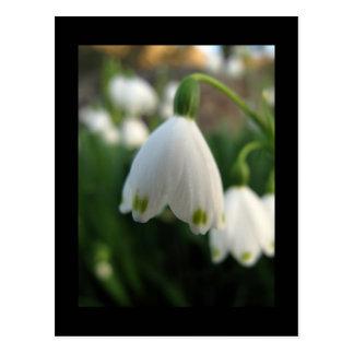 Snowdrop Flower Postcard