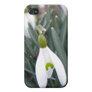 Snowdrop (Galanthus Nivalis) iPhone 4 case