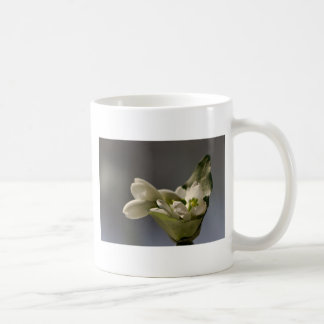 Snowdrop (Galanthus nivalis) Mug