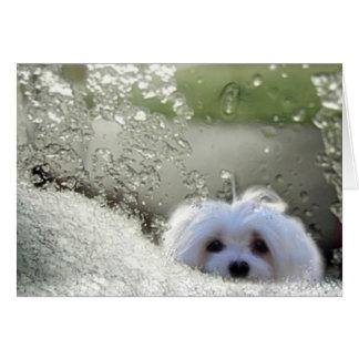 Snowdrop la tarjeta de felicitación maltesa