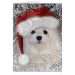 Snowdrop la tarjeta de Navidad maltesa