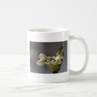 Snowdrop (nivalis de Galanthus) Taza Clásica