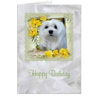 Snowdrop the Maltese Birthday Card