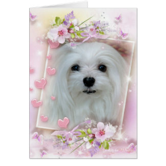 Snowdrop the Maltese Birthday/Greeting Card