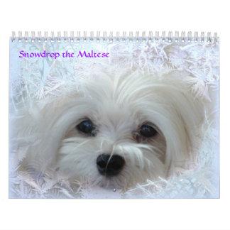 Snowdrop the Maltese Calendar