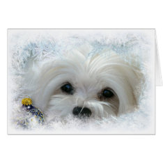 Snowdrop The Maltese Christmas Card at Zazzle