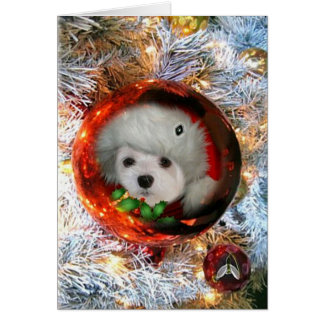 Snowdrop the Maltese Christmas Card